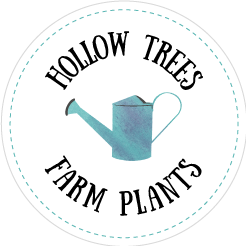 Hollow Trees Farm Plants