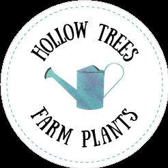 Hollow Trees Farm Plants